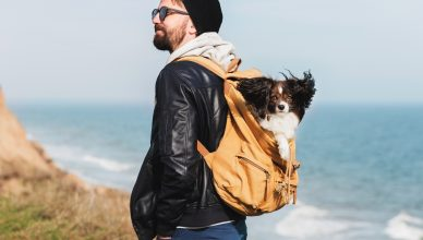 Best Dog Backpack 2019